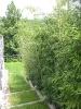 Hausgarten_2