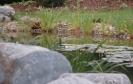 Hausgarten Teich_3